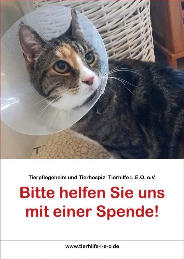 Flyer_Tierhilfe_LEO_eV_titel